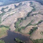 La invasión inmobiliaria en el Lafken Mapu: depredación del bosque nativo, el robo del agua y los loteos ilegales