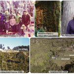El caso judicial de usurpación de tierras en contra de la Sra. Nancy Henríquez de Los Alerzales, La Unión (Parque Alerce Costero)